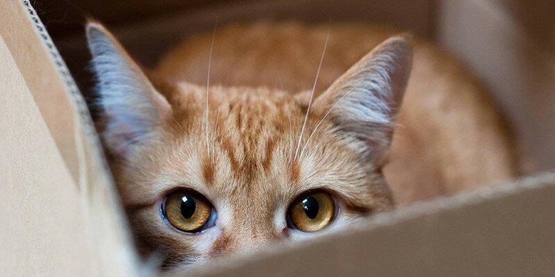Айлурофобия - боязнь кошек
