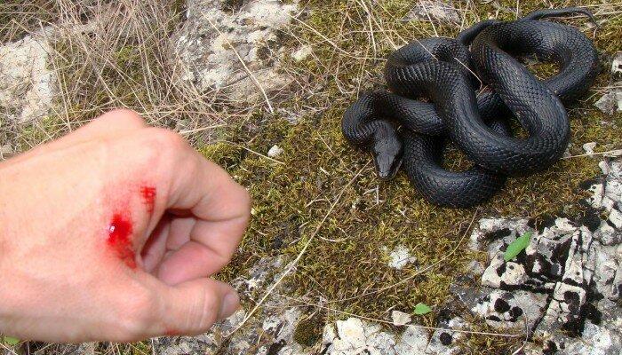 укус змей