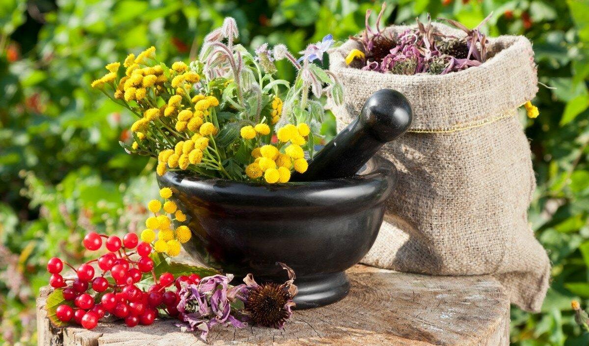 растительные средства от стресса