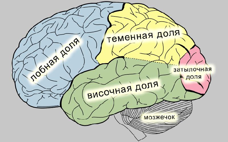 Фокальная эпилепсия у детей